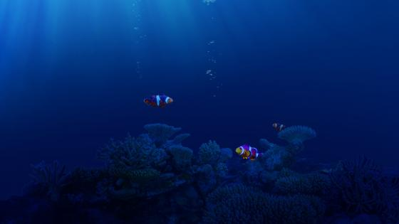 Clownfishes wallpaper