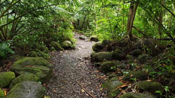Manoa Falls Trail wallpaper