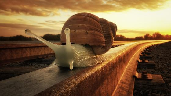 Snail on rail wallpaper