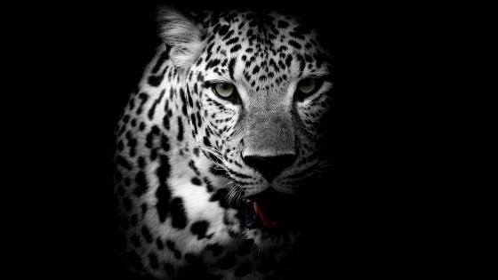 Monochrome leopard wallpaper