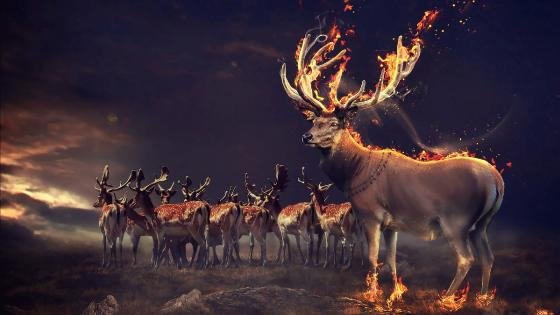 Fantasy Deer with flaming antler wallpaper