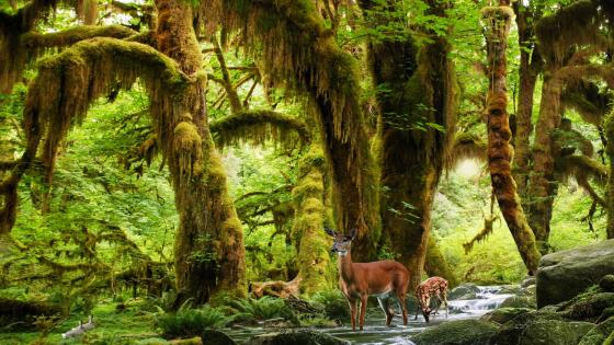 Deers in the rainforest wallpaper