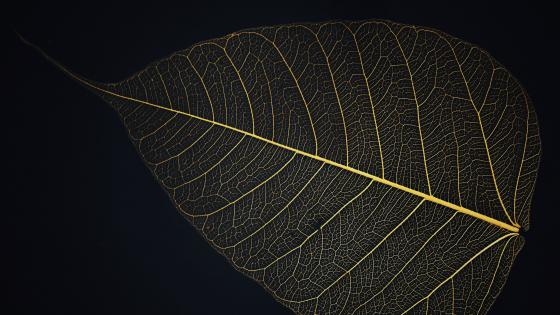Leaf veins wallpaper