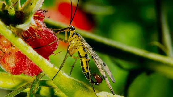 Insect macro photo wallpaper