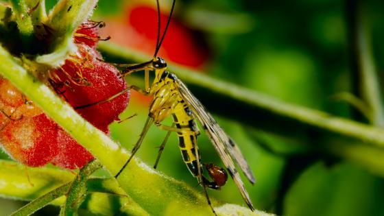 Insect macro photo wallpaper