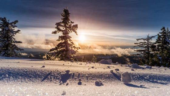 Winter sunshine wallpaper