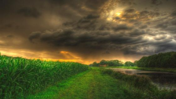 Stormy clouds above the corn field wallpaper
