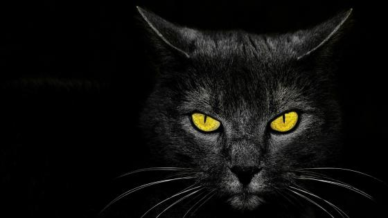 Black cat with yellow eyes wallpaper
