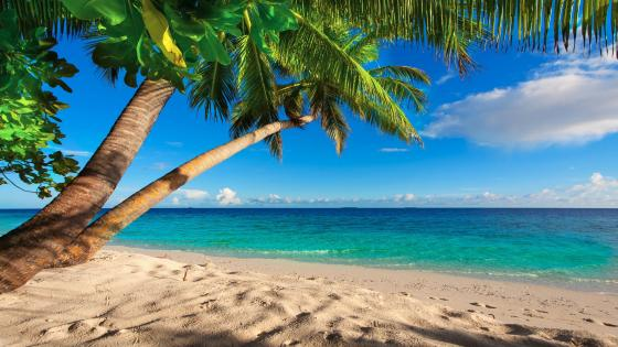Sandy beach with palm trees wallpaper