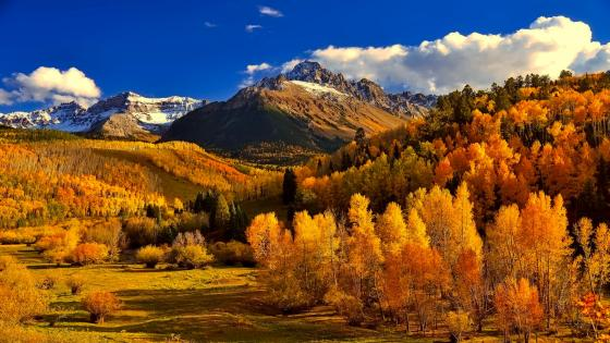 Sunny autumn wallpaper