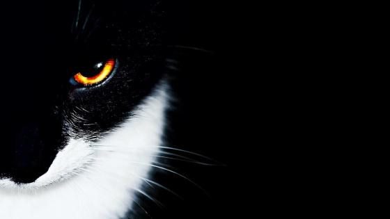 Black cat with hot eyes wallpaper