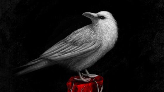 White Raven wallpaper