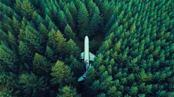 Plane In Middle Of Forest wallpaper