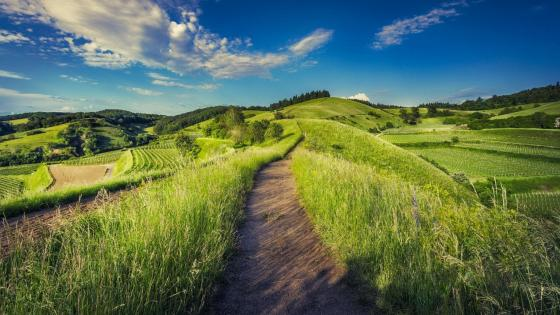 Path in the hills wallpaper
