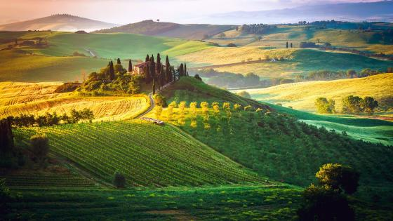 Tuscany vineyard wallpaper