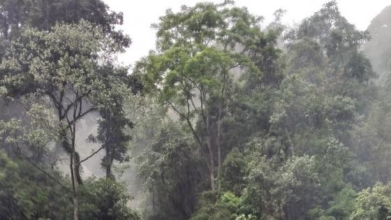 The Green Himalayas wallpaper