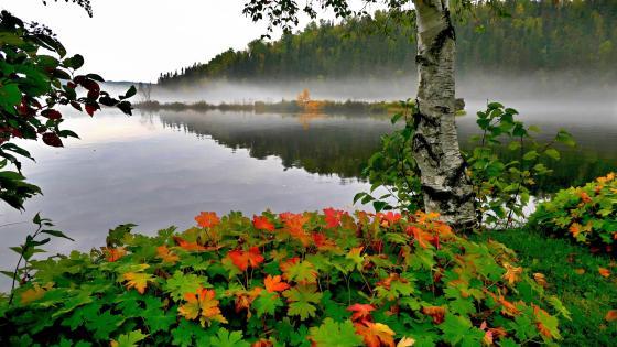 Early autumn mist on the lake wallpaper