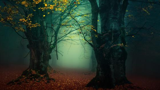 Misty forest lane wallpaper