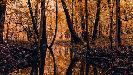 Autumn forest reflection wallpaper