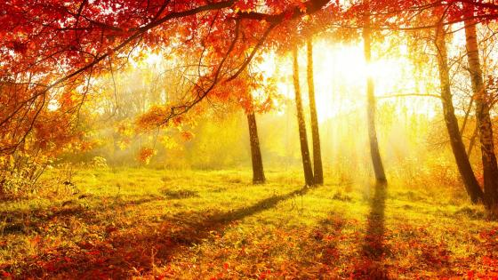 Autumn sunlight in the forest wallpaper