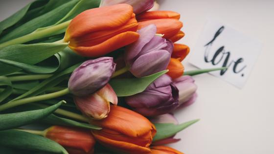 Tulips with love wallpaper