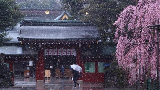 Ōkunitama Shrine wallpaper