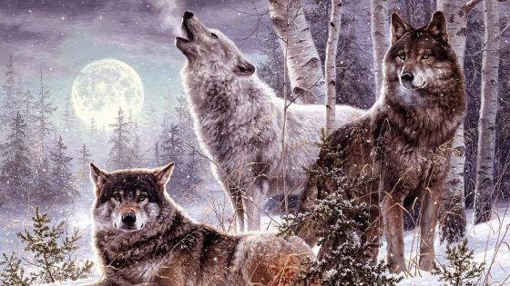 Winter Wolf howling at full moon wallpaper