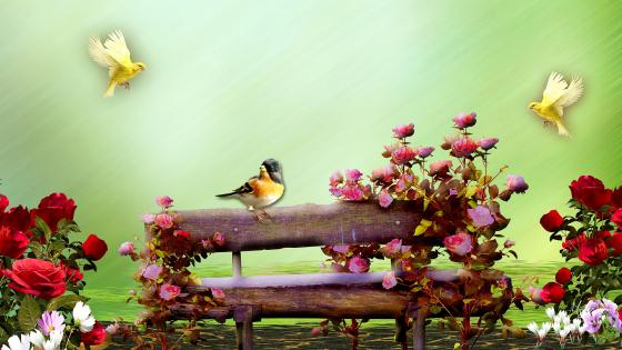 Bird On A Fence wallpaper