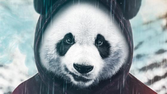 Gangster Panda wallpaper