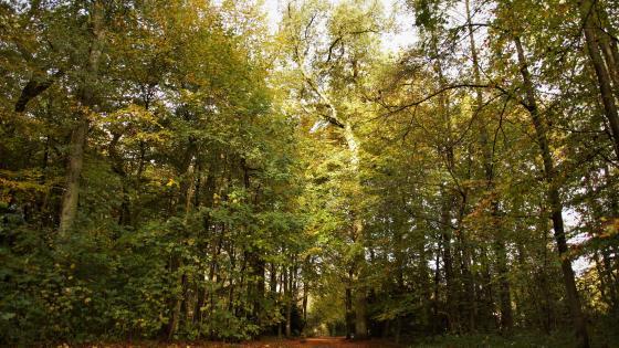 Die sonne im Wald wallpaper