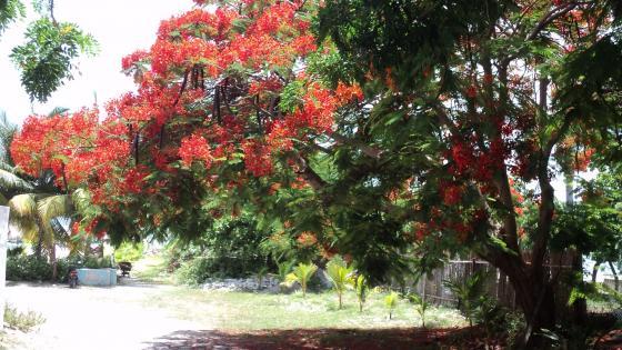Flowery tree wallpaper