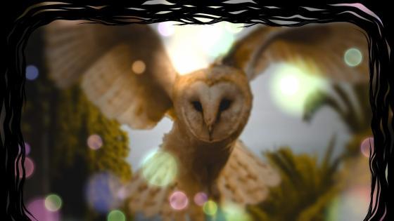 Owl bokeh wallpaper