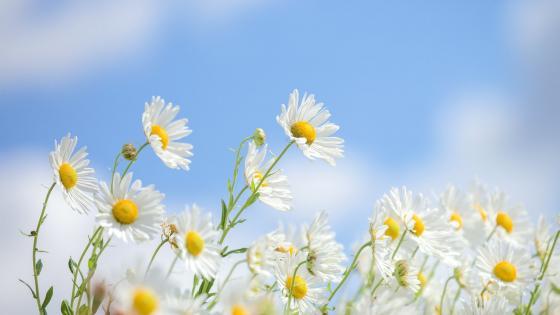 鲜花 wallpaper