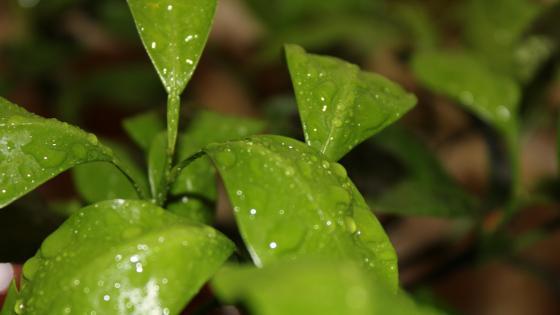 роса на листьях wallpaper
