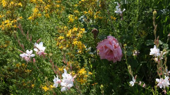 Garden flowers wallpaper