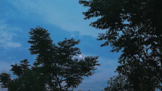 The Moon wallpaper