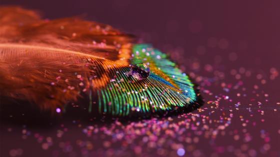 fallen feather wallpaper