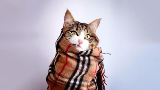 Cold Cat wallpaper