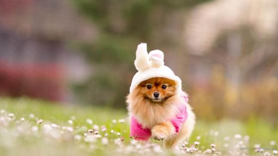 Puppy in dress wallpaper