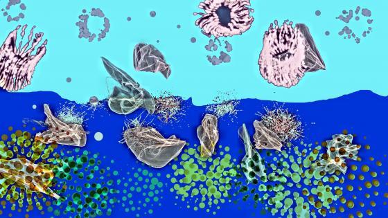 Jellyfish field wallpaper