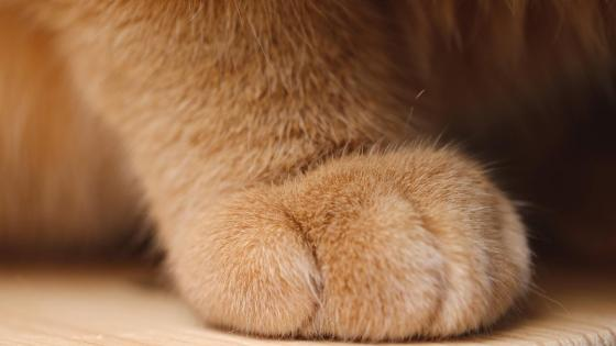 Cat paw wallpaper