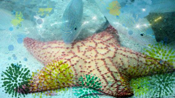 Star and fish wallpaper