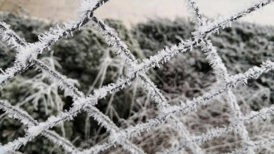 Frozen fence wallpaper