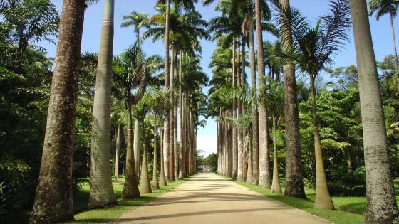 Jardim Botânico-RJ wallpaper