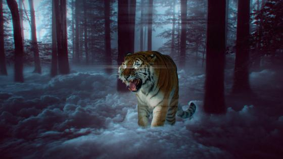 Predator tiger wallpaper