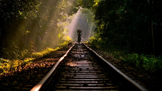 Train Tracks in Lawachara National Park, Bangladesh wallpaper