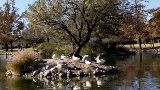 The island of ducks wallpaper