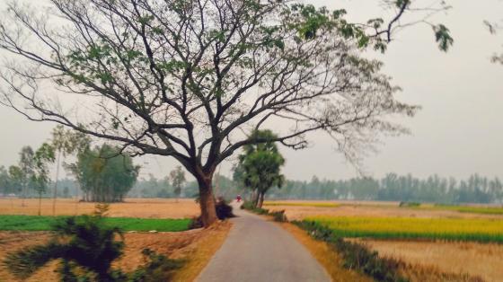 Village Road  wallpaper