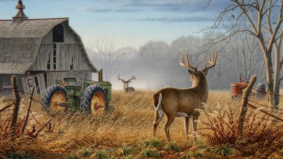 Whitetail deers in the old farm wallpaper