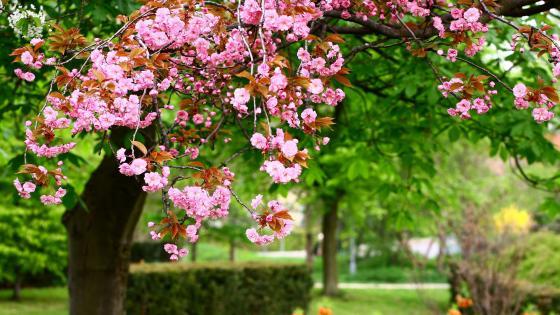 Flower Garden blossoms wallpaper